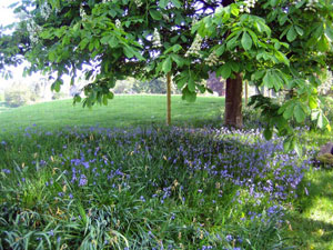 Bluebell drifts on the Springtime Gardens Tour of Europe